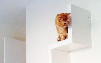 estante gato