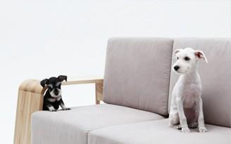 sofa para cachorro