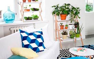 decoradornet-planta-em-casa-00