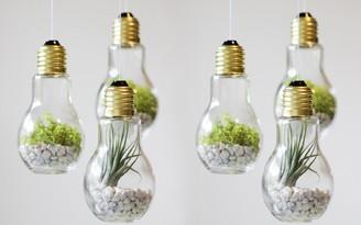 decoradornet-diy-terrario-de-lampadas-01